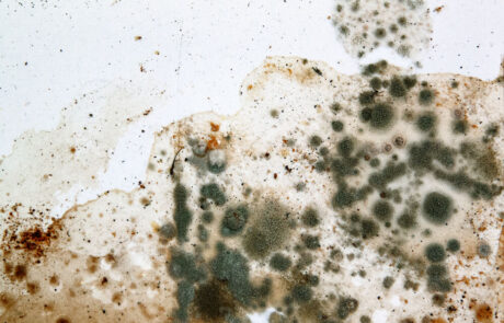 Prečišćivač vazduha kao sredstvo protiv budji na zivodima, pesni i mirisa